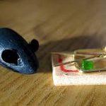 Trappole per topi efficaci - Quali sono le migliori e come usarle