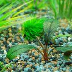 Miglior fertilizzante per acquario - terriccio o liquido