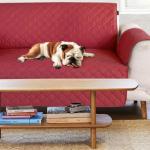 Miglior copridivano per cani - impermeabile o a 3 posti
