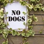 Miglior repellente per cani - funzionano? e quale acquistare?