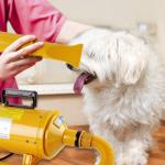 Miglior Soffiatore per cani - Opinioni sui modelli silenziosi e professionali