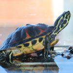 Migliore Acquario per tartarughe - Prezzo e Recensioni