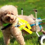 Miglior Carrellino per cani disabili - Dove acquistarlo e come usarlo