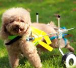 carrellino per cani disabili e anziani