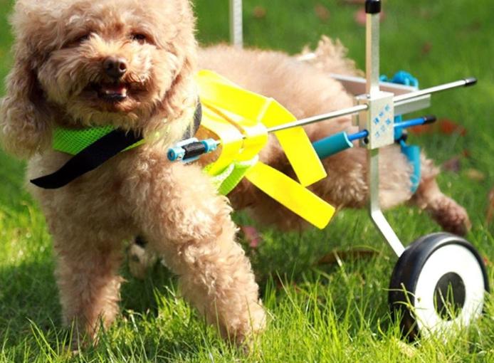 miglior carrellino per cani disabili