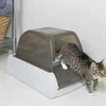 Migliore Lettiera autopulente per gatti - Guida all'acquisto con prezzi e recensioni